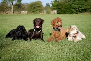 dogs-2200676_1920